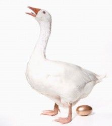 Goose-and-golden-egg-001
